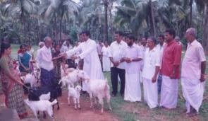 Distributing the goats